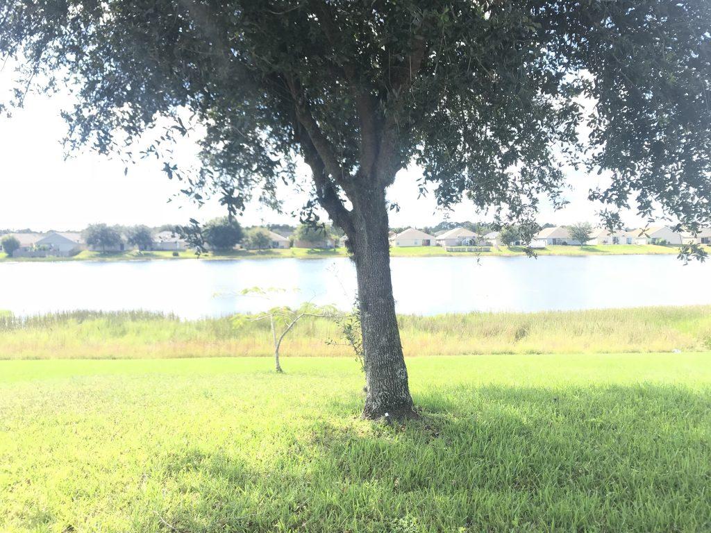 Orlando Property Management 3779-34