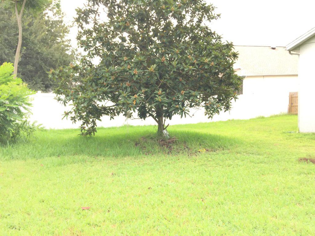 Orlando Property Management 14413-16